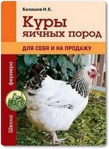 Куры яичных пород - Балашов И. Е.