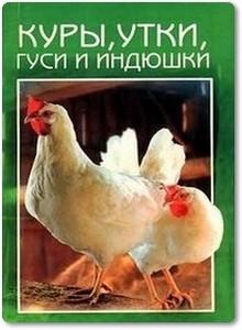 Куры, утки, гуси и индюшки - Рублев С.