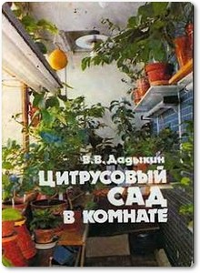 Цитрусовый сад в комнате - Дадыкин В.