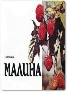 Малина — Ярославлавцев Е.