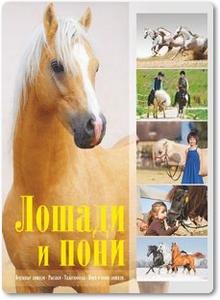 Лошади и пони - Жабцев В. М.
