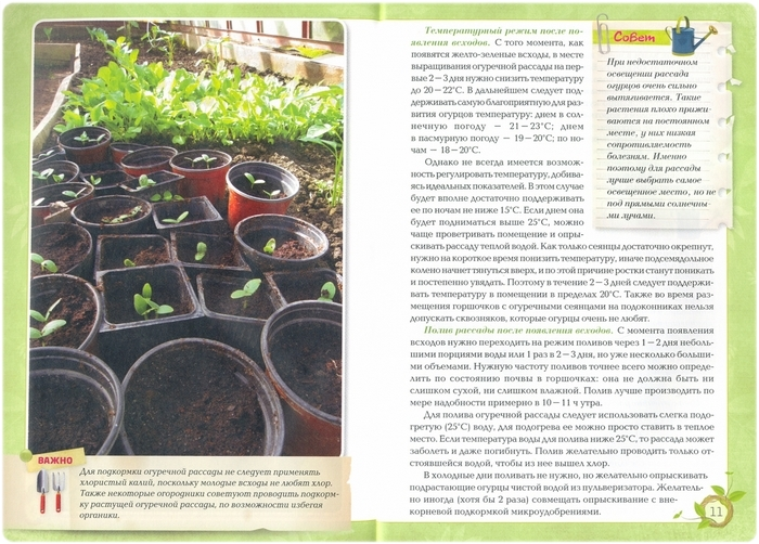 Книга: Огурцы Богатый урожай без ошибок - Белякова А.