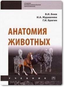 Анатомия животных - Боев В. И. и др.