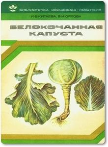Белокочанная капуста - Китаева И. Е.