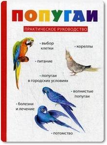 Попугаи - Вишнеева М.