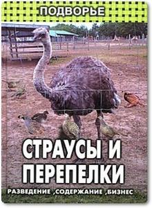 Страусы и перепелки - Братских В.