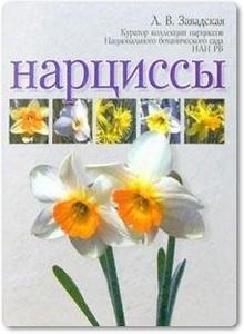 Нарциссы - Завадская Л. В.