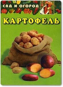 Картофель - Сад и огород