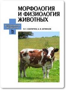 Морфология и физиология животных - Скопичев В. Г. и др.