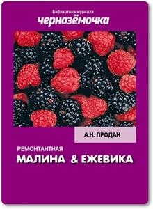 Ремонтантная малина и ежевика - Продан А.