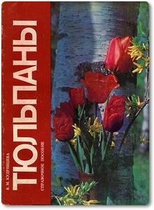 Тюльпаны - Кудрявцева В. М.