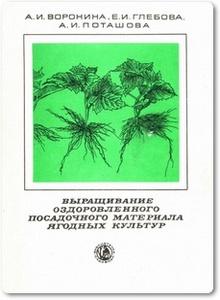 Выращивание оздоровленного посадочного материала ягодных культур - Воронина А. И.