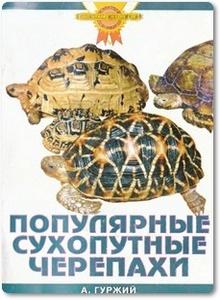Популярные сухопутные черепахи - Гуржий А.