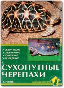 Сухопутные черепахи - Гуржий А.